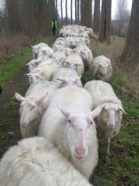 Schapenboerderij te koop
